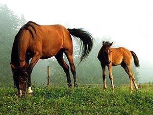 wirkung pferd auf mensch
